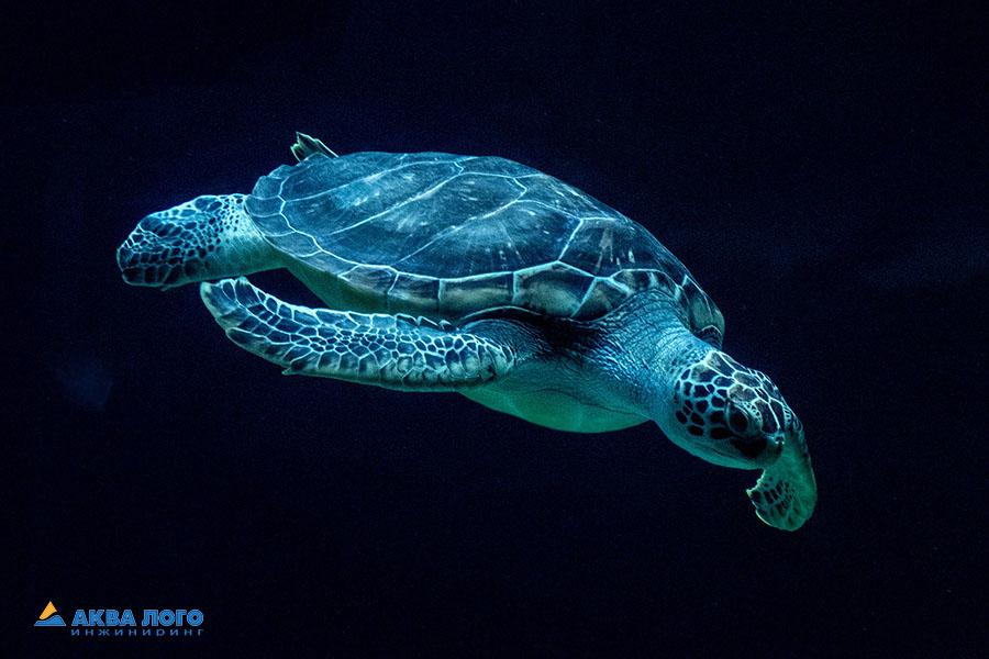 Зелёная черепаха в Москвариуме